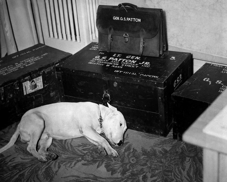 """GEORGE S PATTON DOG """"WILLIE"""" FEW DAYS AFTER GENERALS DEATH - 8X10 PHOTO (DD-191)"""