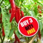 100 Seeds Red Thai Chili Pepper Very Hot Oganic Heirloom For Plant Garden (#B 3 G 1 Free)