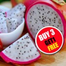 40 Seeds Thai Dragon Fruit Pitaya Pitahaya White Fleshed fresh from Thai grower  (#B 3 G 1 Free)