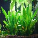 New Green Fish Tank Aquarium Decor Artificial Plastic Water Grass Plant Ornament
