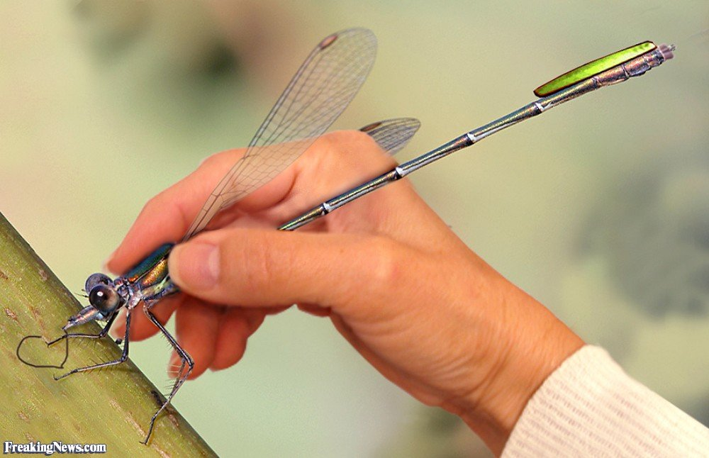 Dragon Fly Pen