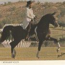 ARABIAN HORSE POSTCARD SCHARIF 1970s