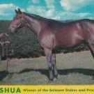 Nashua Postcard Champion Thoroughbred Horse Spendthrift Farm