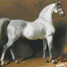 Grey Arabian Stallion Postcard Horse Beautiful Alfred de Dreux