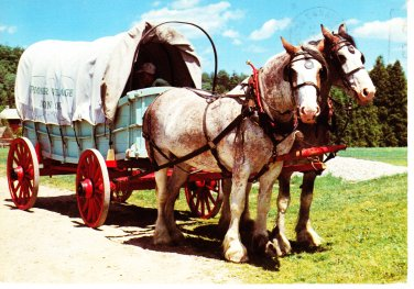 Covered Wagon Postcard Horses Canada Doon Pioneer Village