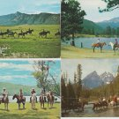 Horses Postcards Trail Riding Lot of Four