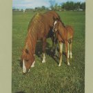 Beautiful Mare and Foal Photo Postcard Pasture Scene