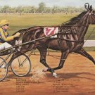 Albatross Bay Standardbred Pacer Stallion Postcard
