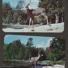 Grey Deer Buck Postcards Vintage Whitetail Wildlife VG Chrome