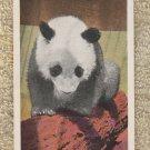 Giant Panda Postcard Vintage Moi-Moi Chicago Zoo Brookfield Illinois