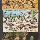 Desert Animals Postcards Wildlife Southwest Deer Jack Rabbit