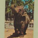 Indian Elephant Vintage Postcard Unused San Diego Zoo