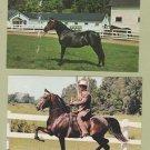 MORGAN HORSES POSTCARDS Orcland Bold Fox UVM Watchman