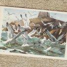 Sea Gulls Miniature Art Postcard Birds Wildlife Used