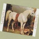 Arabian Horse Miniature Art Post Card Alfred de Dreux
