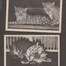 Two Unused BIG CAT Vintage Postcards TIGER JAGUAR