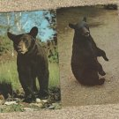 Two BLACK BEAR Postvards Vintage Wildlife Animals