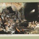 Sea Lion Caves Postcard Oregon Coast Wildlife