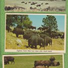Lot of 5 BISON BUFFALO POSTCARDS WILDLIFE