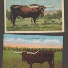 Lot of 2 Texas Longhorn Cattle Postcards Vintage Ranch