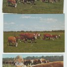 Hereford Cattle Postcards Ranch Farm Livestock