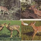 Lot of 7 Fawn Post Cards Deer Wildlife Animals