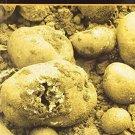 Homeopathy in the Irish Potato Famine [Apr 01, 2013] Treuherz, Francis