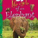 Life Cycle of an Elephant: Key stage 1 [Jan 01, 2011] Mukherjee, Vijita