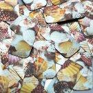 "Rectangle Sequin 1.5"" Scallop Seashell Print Metallic"