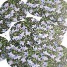 "Round Sequin 1.5"" Lavender Violets Floral Flower Opaque"