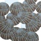 """Round Sequin 1.5"""" Scallop Shell Ocean Sealife Opaque"""