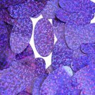 Violet Blue Sequin Glitter Hologram Oval 1.5 inch Couture Paillettes Made in USA