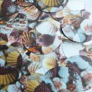 "Round Sequin 1.5"" Brown Pink White Seashell Print Opaque"