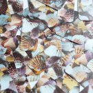 "Rectangle Sequin 1.5"" Brown Pink White Seashell Print Opaque"