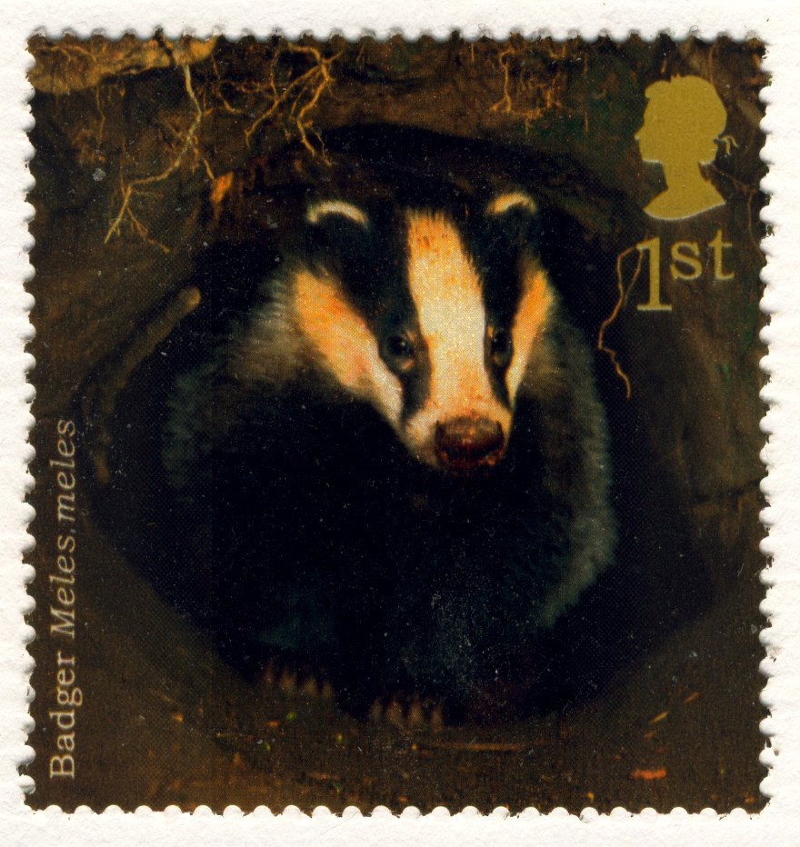 Animals on Stamps - Badger 1st Class Royal Mail Stamp NHM at Face Value