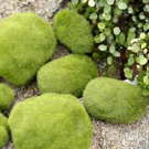 1 Mini Moss Stone Fairy Garden Accessories, Miniature Plants Woodland,ornaments