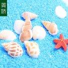 10X Mixed Natural conch shells Fairy Garden Dollhouse For Sea Micro Landscape