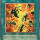Yugioh Multiplication of Ants (IOC-098) 1st edition near mint card Common