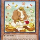 Yugioh Madolche Cruffssant (ABYR-EN025) Unlimited edition near mint card Common