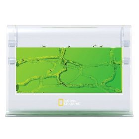 National Geographic Ant Gel Colony