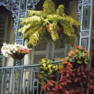 French Quarter Balconey Fern New Orleans Baltas Matted Art Print