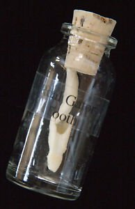 Alligator Tooth in Glass Bottle Swamp People Gator New Orleans Louisianna Cajun