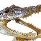 Alligator 5-6 GATOR Head Skull Bayou Swamp New Orleans People Reptile Teeth
