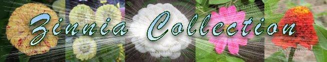 0120 - FABULOUS Seeds COLLECTION 5 ZINNIA  varieties SAVE OVER 40%