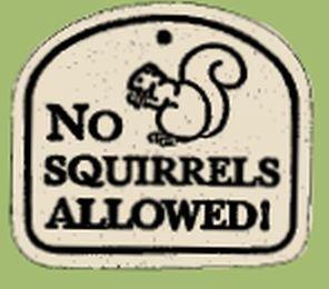 'NO SQUIRRELS ALLOWED!' Weatherproof PLAQUE & hanger