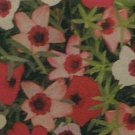 SMALL CUP-LIKE FLOWERS Flax CHARMER MIX Annual SEED
