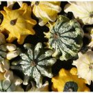 STRIPED VERSION Crown of Thorns GOURD ANNUAL Seeds