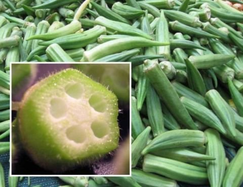 Delicious in Soups & Stews OKRA 'Clemson' Seeds ANNUAL