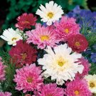 FULLY DOUBLE & semi Cosmos 'Double Click' ANNUAL Seeds