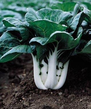EASY TO GROW! Pak Choy Joi Choi F1 Seeds VEGETABLE